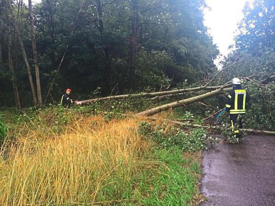 Loeschzug-Leeden-hilft-nach-ICE-Unfall-56-Sturm-Einsaetze-fuer-die-Feuerwehren_image_630_420f_wn